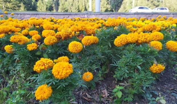 Более 137 тысяч цветов будут высажены вНижнем Тагиле в2021 году