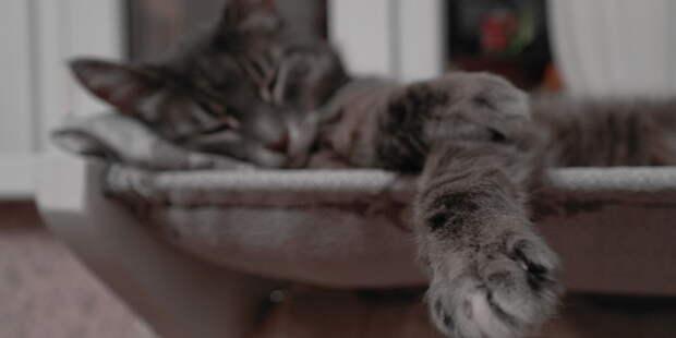 Вот как -то так. Мне баловство, а коту приятно.  батарея, кот, лежанка, старость, тепло