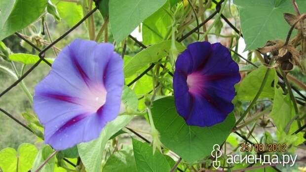 Листок – стрелочкой, цветок – тарелочкой, а стебель – былинка, завит, как пружинка