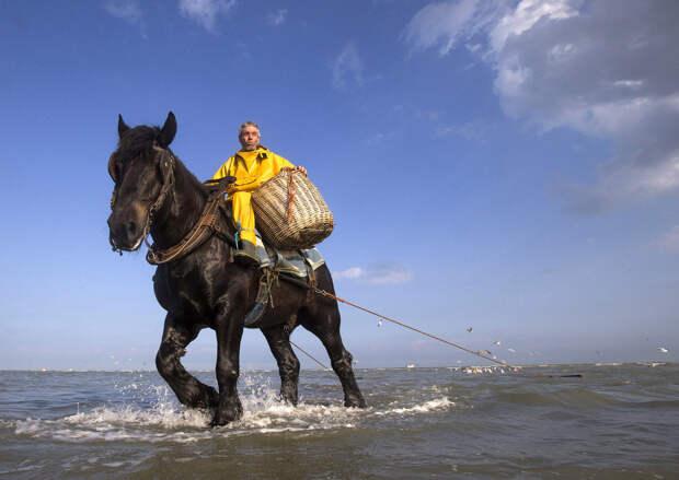 Рыбалка на лошадях