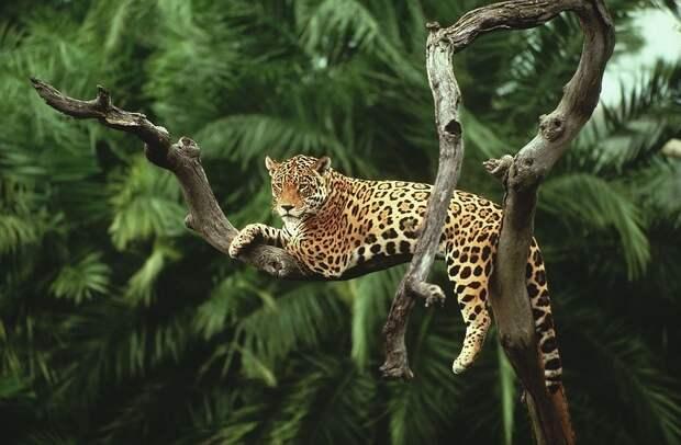 Amazonas07 Большое фотопутешествие по лесам Амазонки