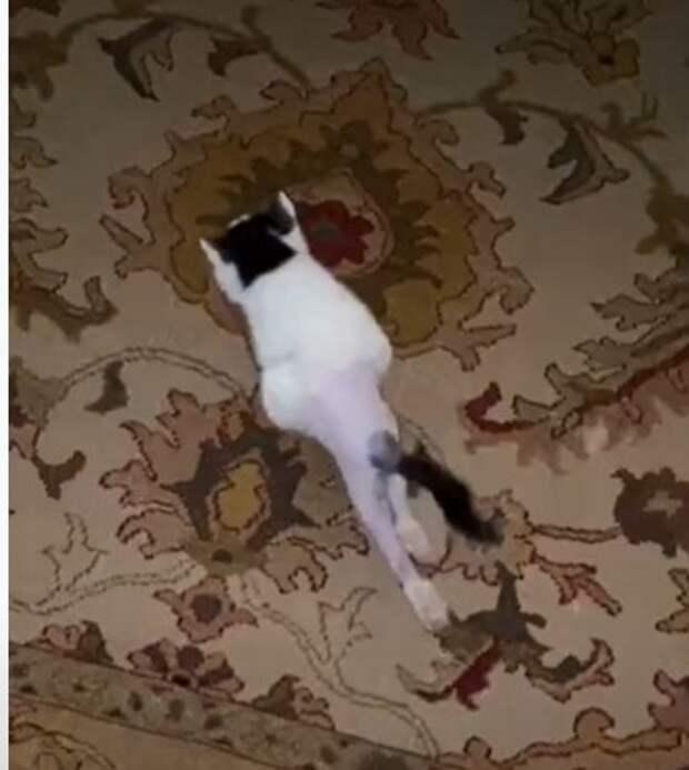 Девушка смогла поставить парализованного котенка на ноги