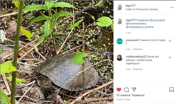 Фото дня: в сквере по Олонецкому проезду заметили болотную черепаху