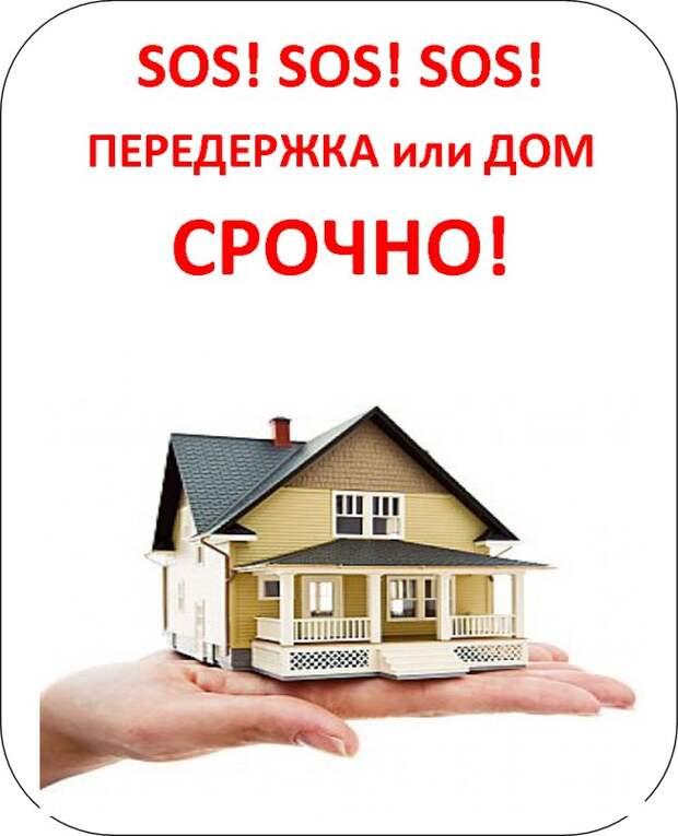 Приютите её - пусть даже этот дом будет временным, но он спасёт ей жизнь!