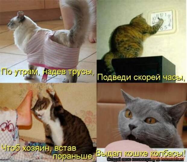 Хозяйка, встав со стула, нашла пропавшего кота