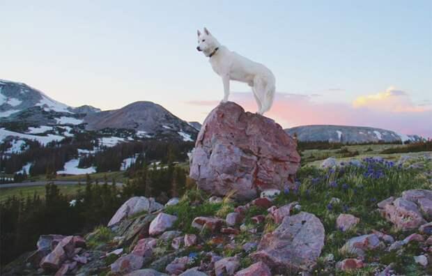 путешествие по США Джона Шторца и его собаки Вольфа (21)