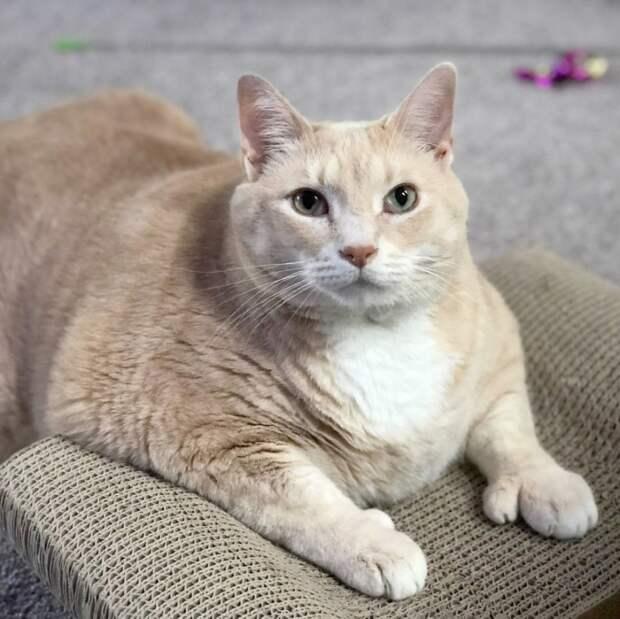 Девушка с парнем взяли из приюта полного кота и решили привести его в форму!