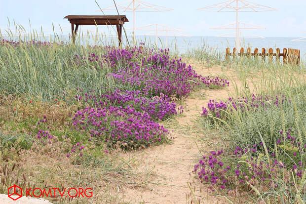 Таких по красоте пляжей, вблизи населенных пунктов, в Крыму нет