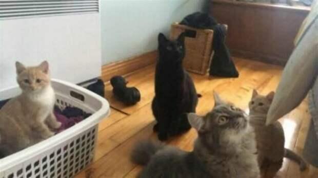Двое котят жались друг к другу и заглядывали в глаза людей