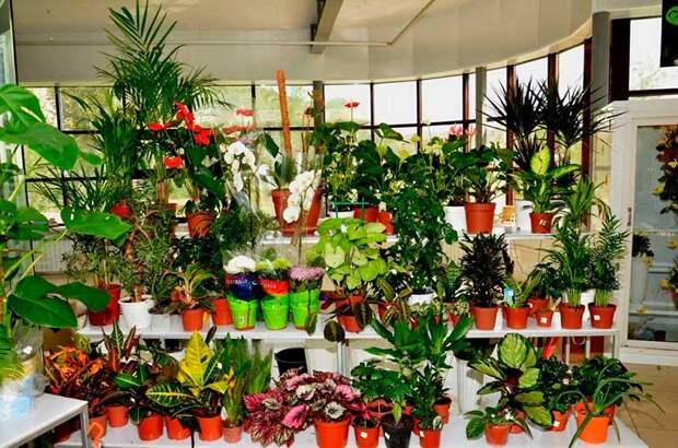 Покупка и размещение комнатных растений