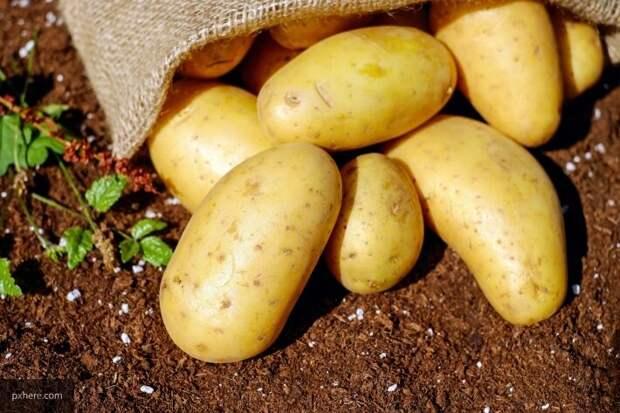 Охрименко назвал причины высоких цен на фрукты на Украине