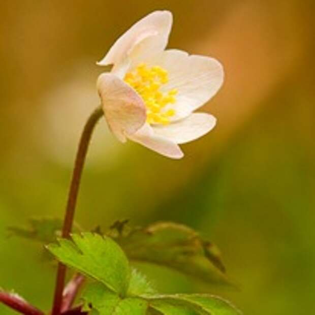 Фото цветов весны, весенняя клумба