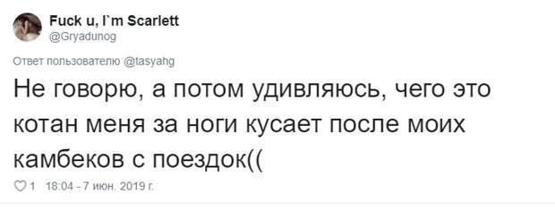 24. Тася Никитенко, животны, забавно, кот, кошка, люди, твиттер, юмор