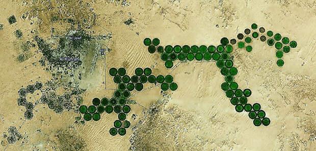 Ожививший пустыню