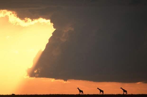 afrikanskie zakaty 5 Потрясающие африканские закаты от Пола Гольдштейна