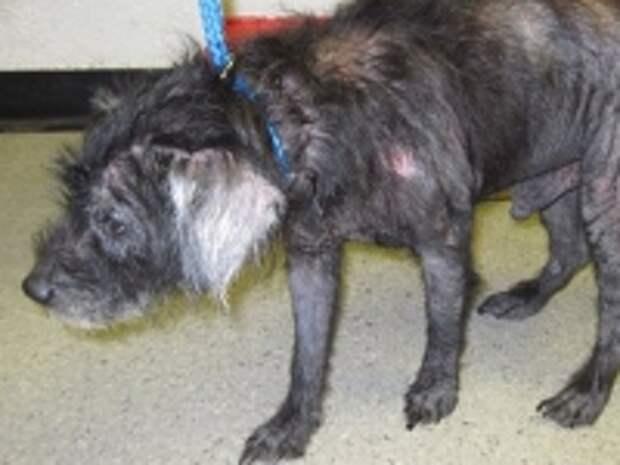 ПРАВО.RU: Правозащитники предложили создать инспекции приютов бездомных животных