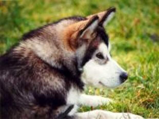 http://zooclub.ru/skat/img.php?w=300&h=150&img=./attach/fotogal/oboi/dogs/61.jpg