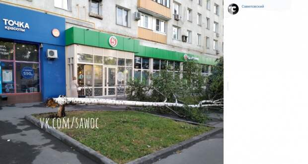 На Башиловской убрано упавшее дерево