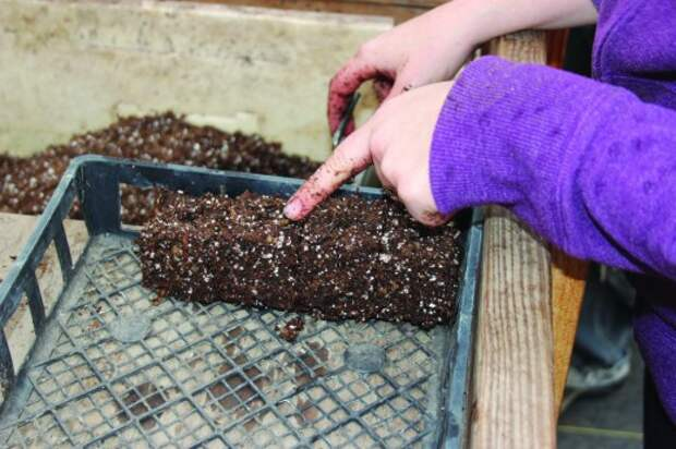 Сформированные брикеты почвосмеси для рассады