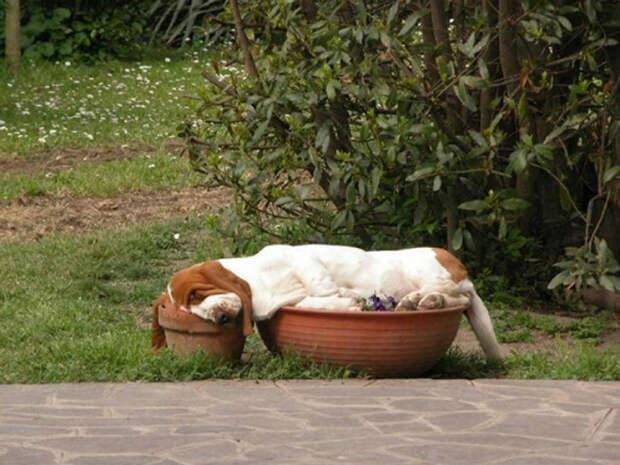 Спят, где упали))