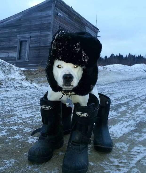 9 собак, которые готовы к зимним холодам