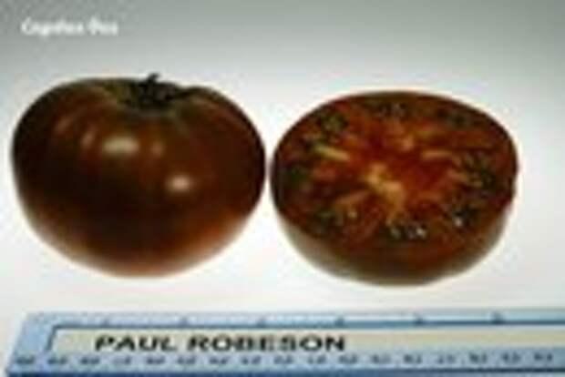 Черноплодные сорта томатов