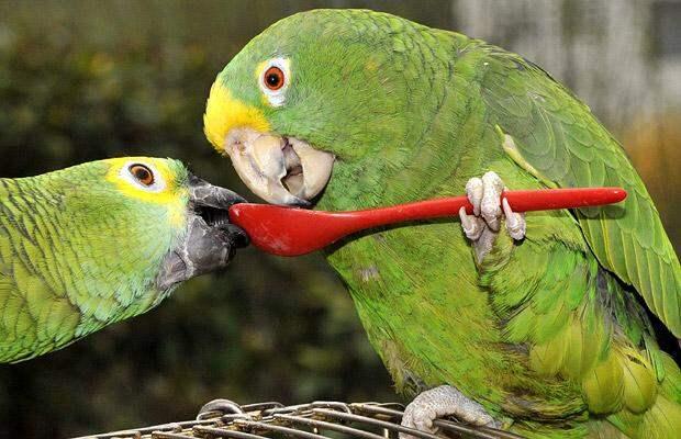 https://secure.i.telegraph.co.uk/multimedia/archive/01462/parrots_1462460i.jpg
