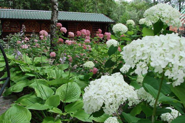 Сад мечты! Радость созерцания
