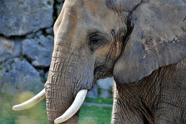 Топ-10 самых опасных существ на планете