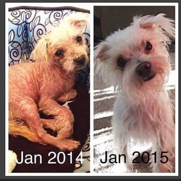 36 фото о том, как изменились собаки после того, как их ″усыновили″