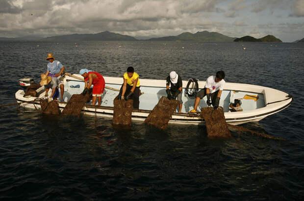 Выращивание золотого жемчуга на Филиппинах