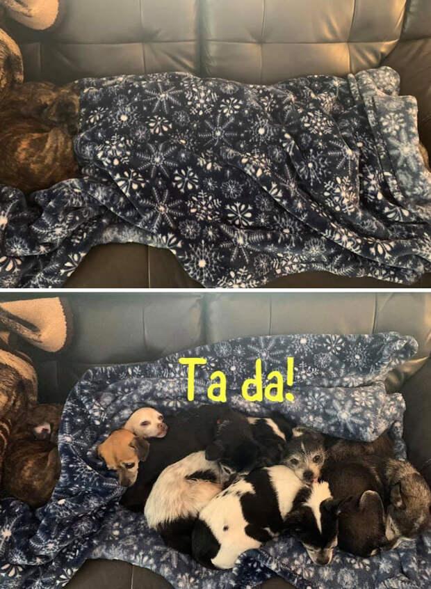 Мастера маскировки: 10+ смешных собак, которые обожают играть в прятки