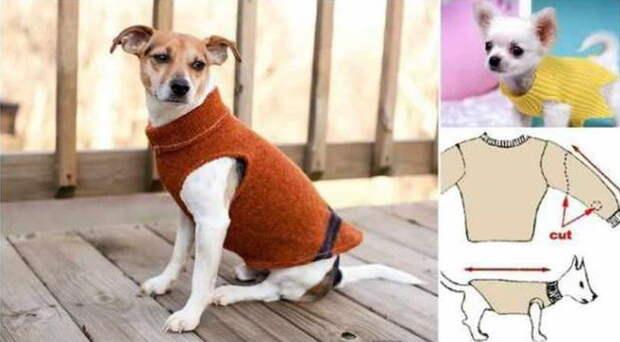 9. Одежда для собаки свитер, своими руками, совет, хитрости