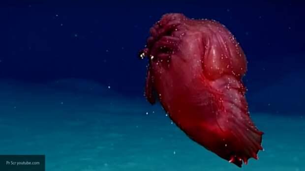"""Ученые показали """"безголового куриного монстра"""" у берегов Антарктиды"""