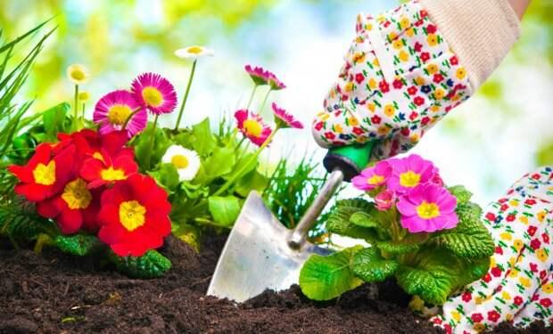 Как красиво оформить клумбу непрерывного цветения своими руками