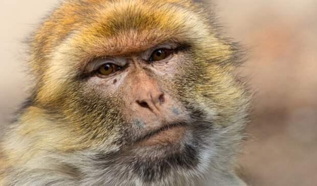 Жительница Оренбурга нашла дикую обезьяну вподъезде