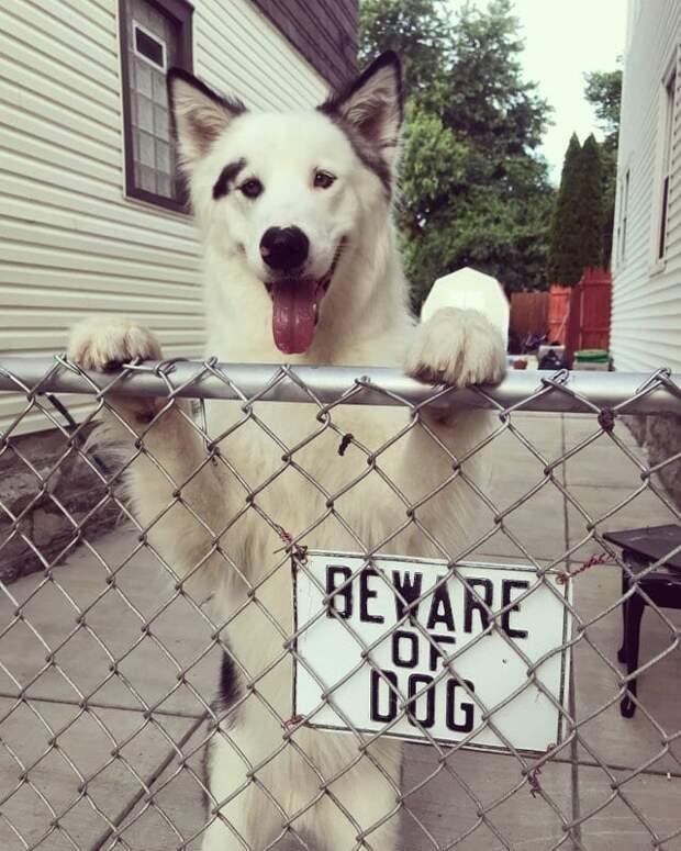 8. Осторожно, тут красавчик! животные, кошка, прикол, собака, табличка, умора, юмор