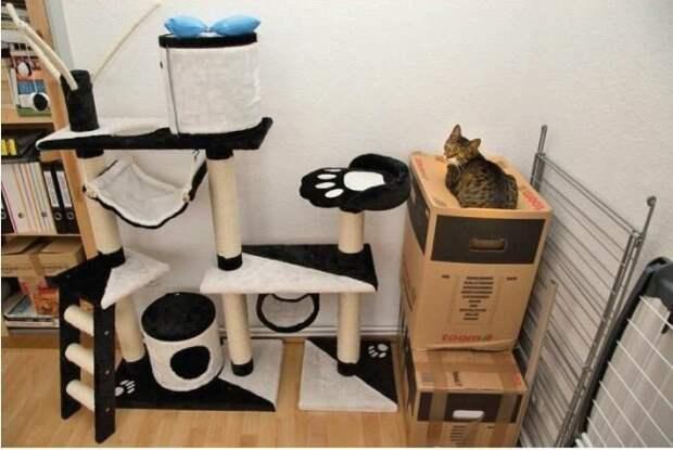 Прежде чем покупать коту дорогую кошачью мебель, подумайте еще раз: может у вас завалялась пара ненужных коробок? интересное, кошки, фотографии
