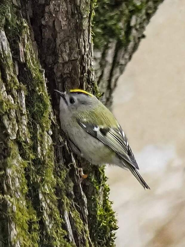 Маленькая и прожорливая птичка вернулась в парк «Кузьминки»