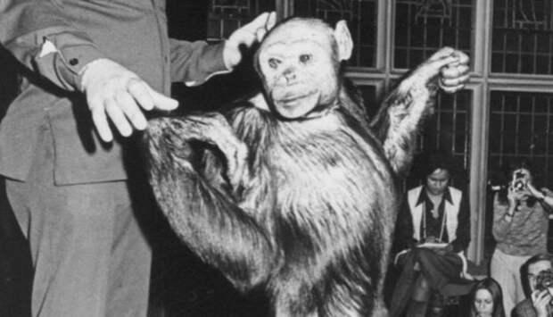 Американский гибрид обезьяны и человека.