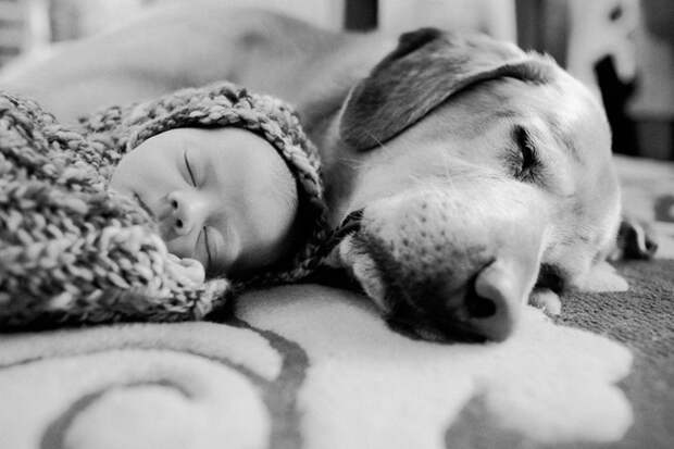 младенцы и собаки первая фотосессия (20)