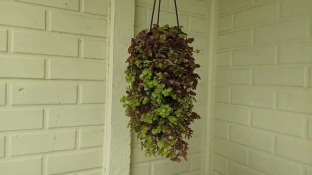 Отличное кашпо с шикарным и легким в уходе растением