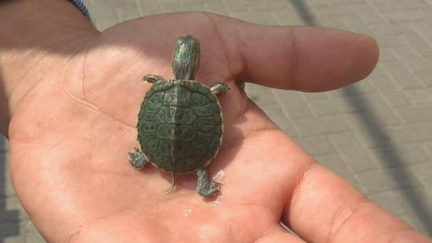 Более 30-и черепах погибли на уникальном озере в Воронеже