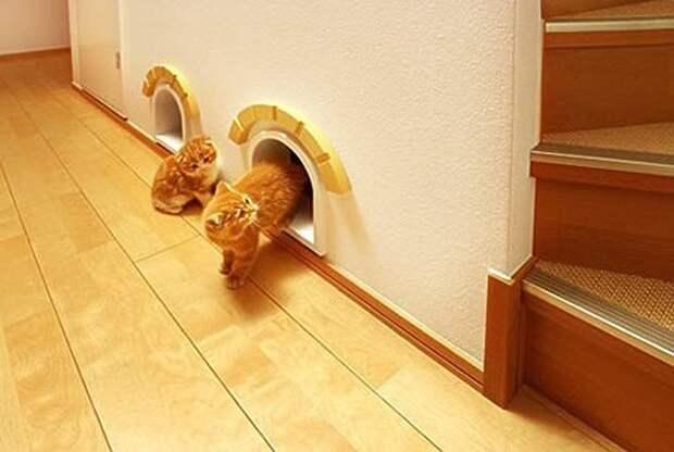 cathouse04 Дизайн для котов