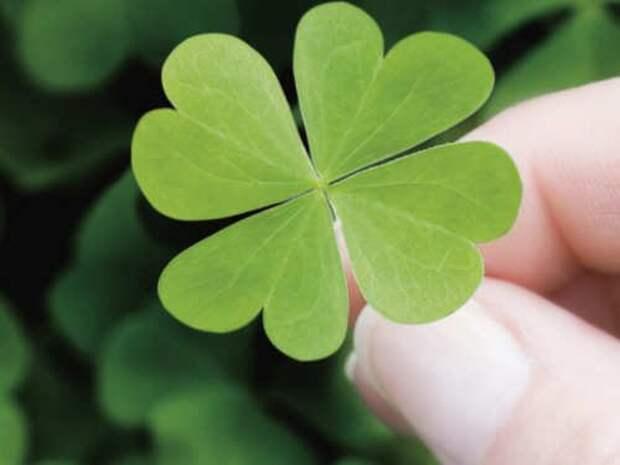 5 примет на удачу перед важным делом