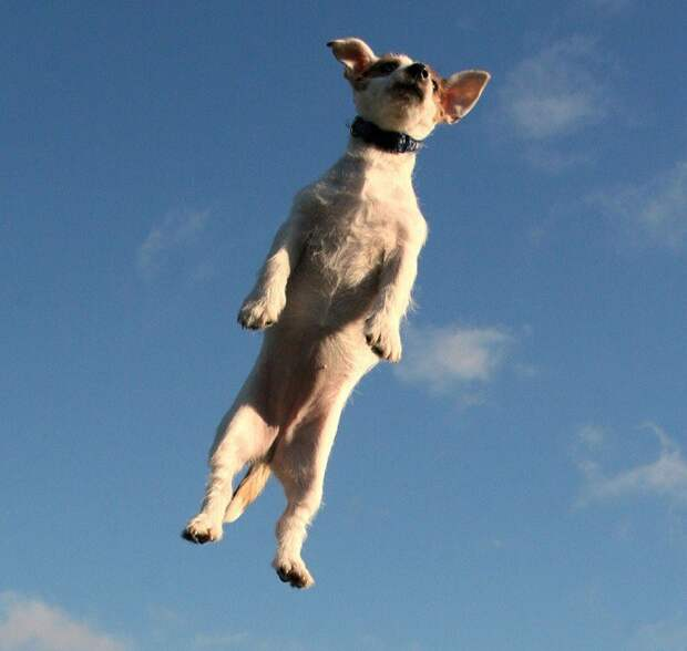 Про одну летающую собаку Про одну летающую собаку, рассказ, случай на дороге