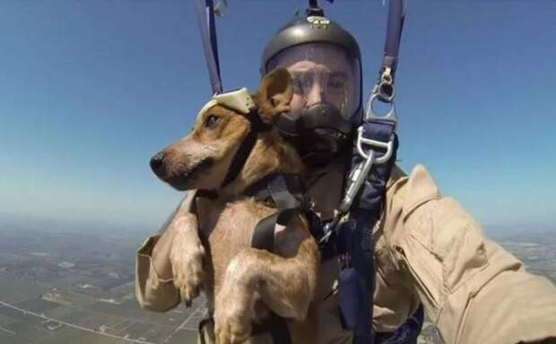 Служебные собаки России получат свои парашюты