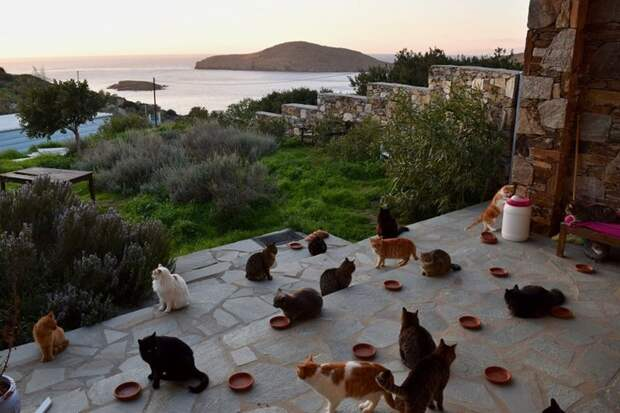 Как получать деньги, тусуясь с кошками на прекрасном греческом острове Сирос, в мире, домашние питомцы, животные, коты, работа, уход