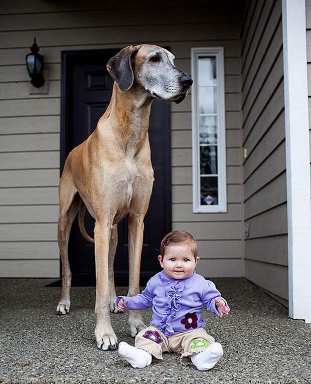 31. Лучшие друзья  размер, собака
