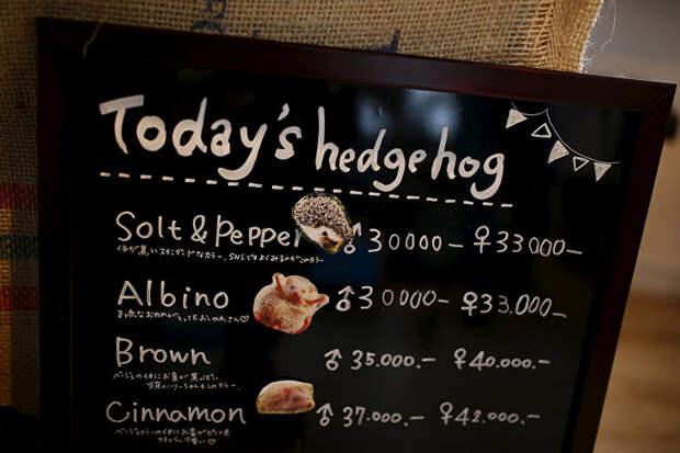 В Токио открылось ежовое кафе